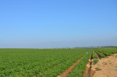 Se da un paso más para poner en riego las concentraciones de Arroyo del Campo y Los Quintos